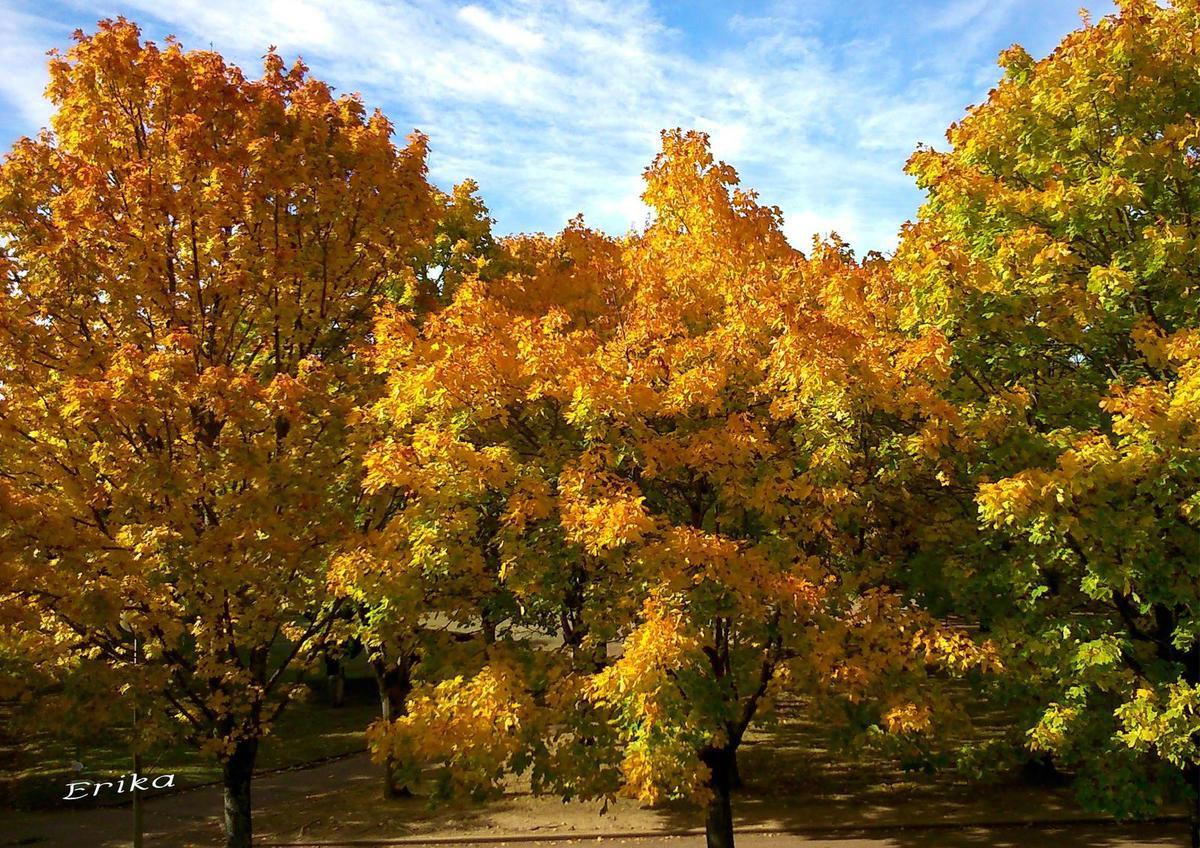 La beauté des arbres en automne...