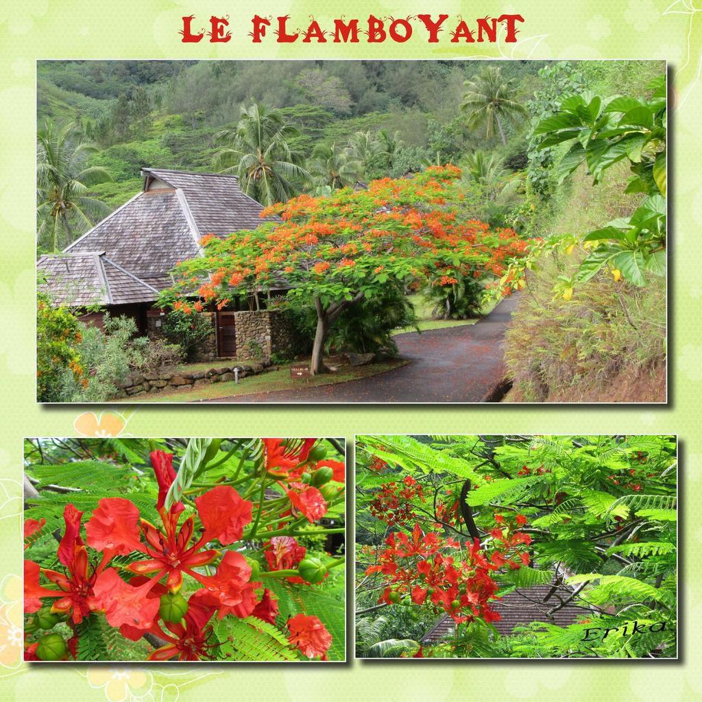 Vacances en Polynésie suite...