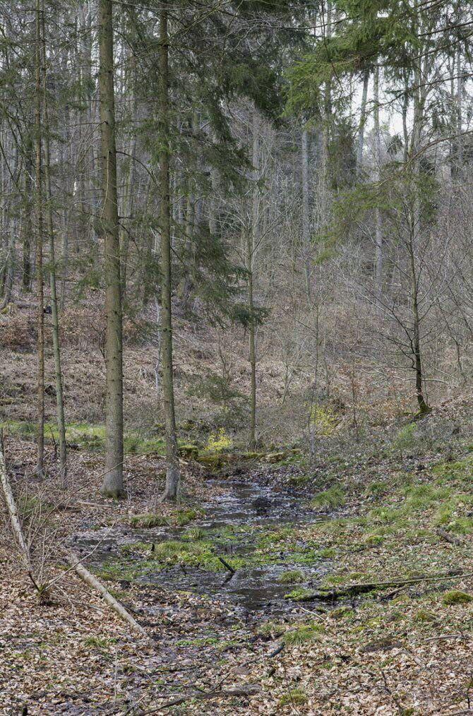 La source de l'Eichel, un maigre filet d'eau. Photo : DNA-Marie-Colette Becker