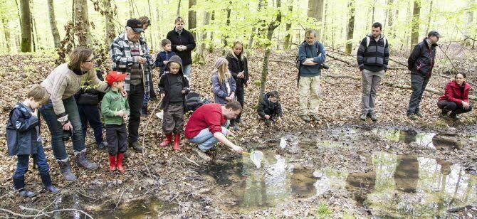 À la pêche aux amphibiens des forêts alsaciennes. Que va-t-il sortir de l'eau ? Photo : MCB-DNA