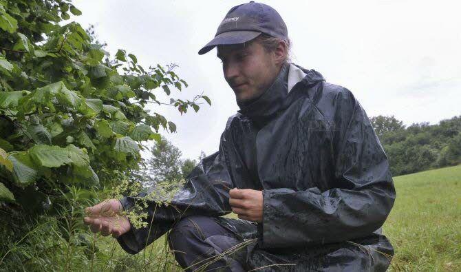 Benoît Lamard, jardinier-botanique du Conservatoire botanique d'Alsace, réalise un suivi une fois toutes les deux semaines et travaille à un protocole de germination du pigamon simple. Photo DNA – Marc ROLLMANN