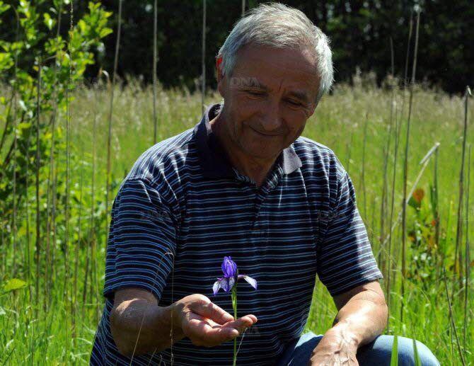 Sa plus belle récompense : pouvoir admirer l'iris de Sibérie, qui avait disparu des prairies riediennes dans les années 80. Photo DNA - J.-P. Kaiser