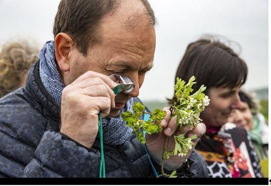 Roland Gissinger présente l'aubépine. La loupe botanique permet d'observer les détails des fleurs.