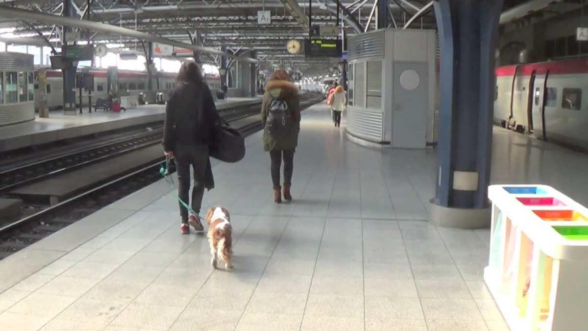 ミミちゃんとタリス Mimi on Thalys
