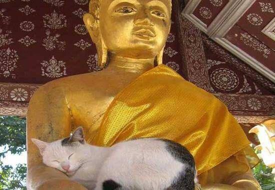 La légende bouddhiste sur les chats