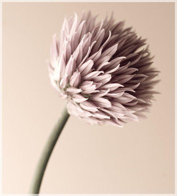 Fleur de Vie...