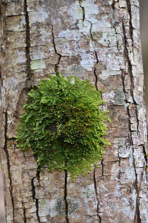 Forêt Brocéliande à Voiron
