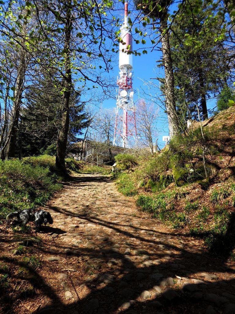 Ancien chemin empierré menant vers le sommet du Donon