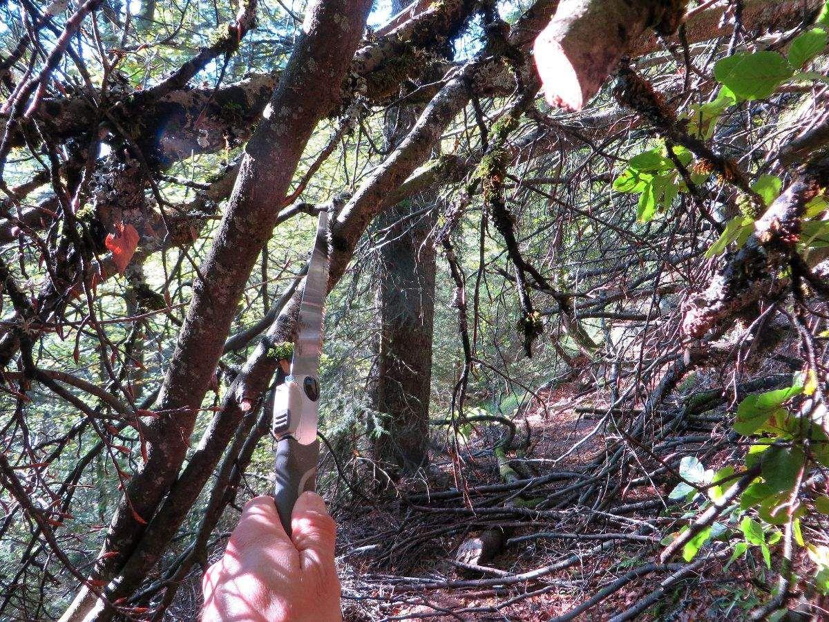 Un peu plus loin je dois sortir la scie et tailler dans les branches pour passer.