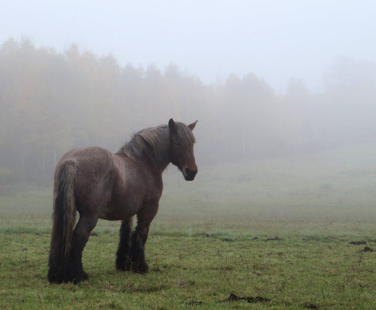 Et de retour dans les vallées, je retrouve aussi le brouillard !