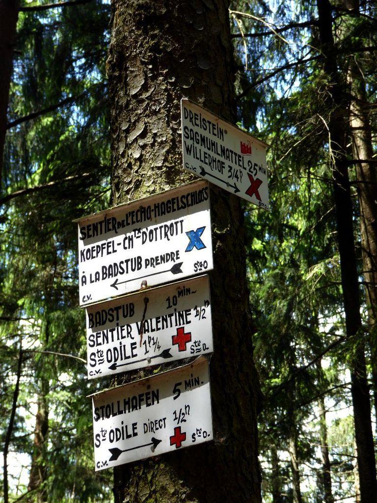 De Welschbruch au Mont Ste Odile