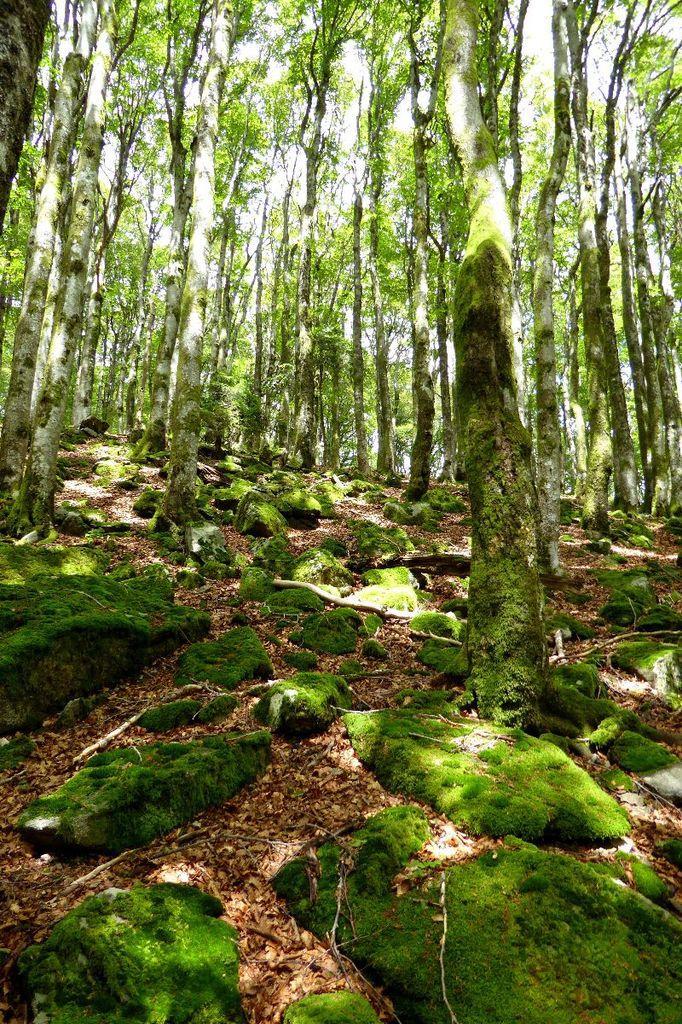 Le Petit Ventron est recouvert de forêt et de roches