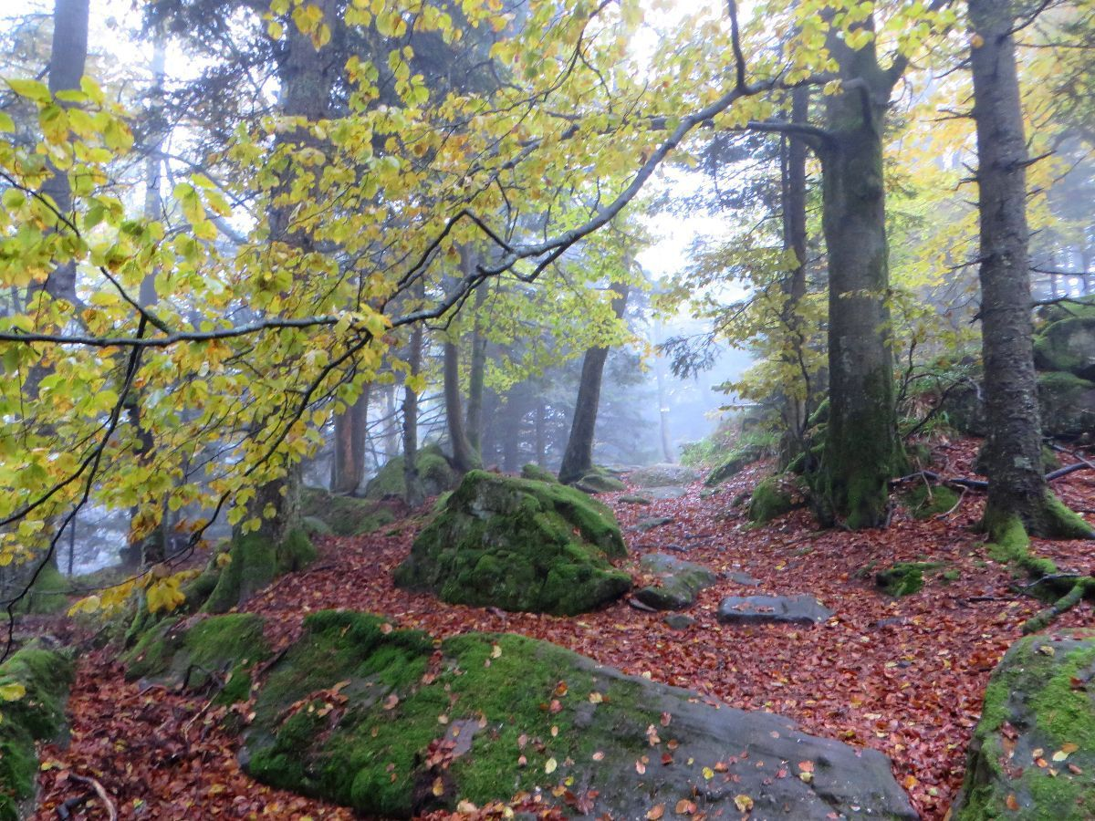 Randonnée dans le massif du Schneeberg