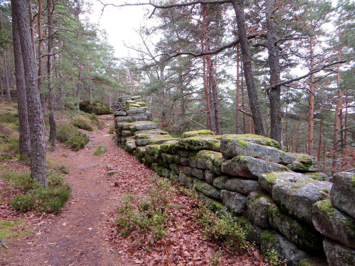 Le tour du Mont Sainte Odile par le mur païen et les ruines du Landsberg