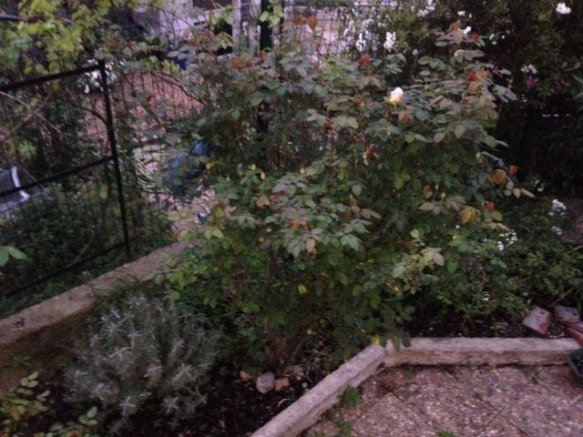 Suis descendue dans le jardin