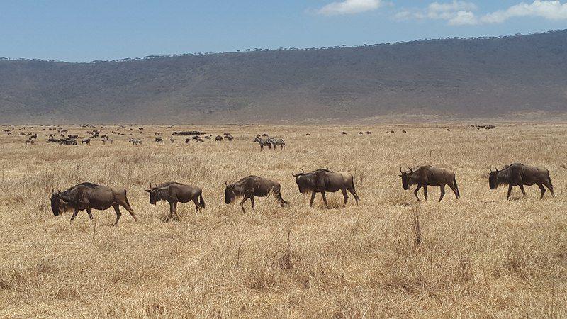 En Tanzanie