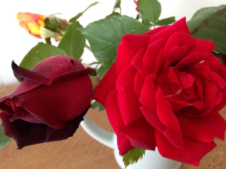 Les roses de Septèmes avec une tendre pensée pour notre chère Nini