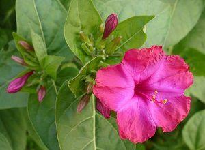 Sac Quelques Fleurs : nouvelle fleur
