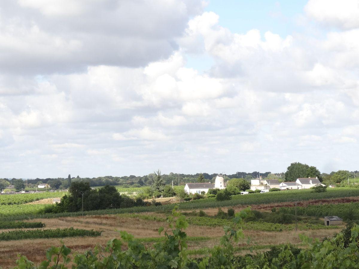 Savennières, Domaine de la Roche aux Moines, Vue sur la Loire et le moulin du vallon, Cl. Elisabeth Poulain