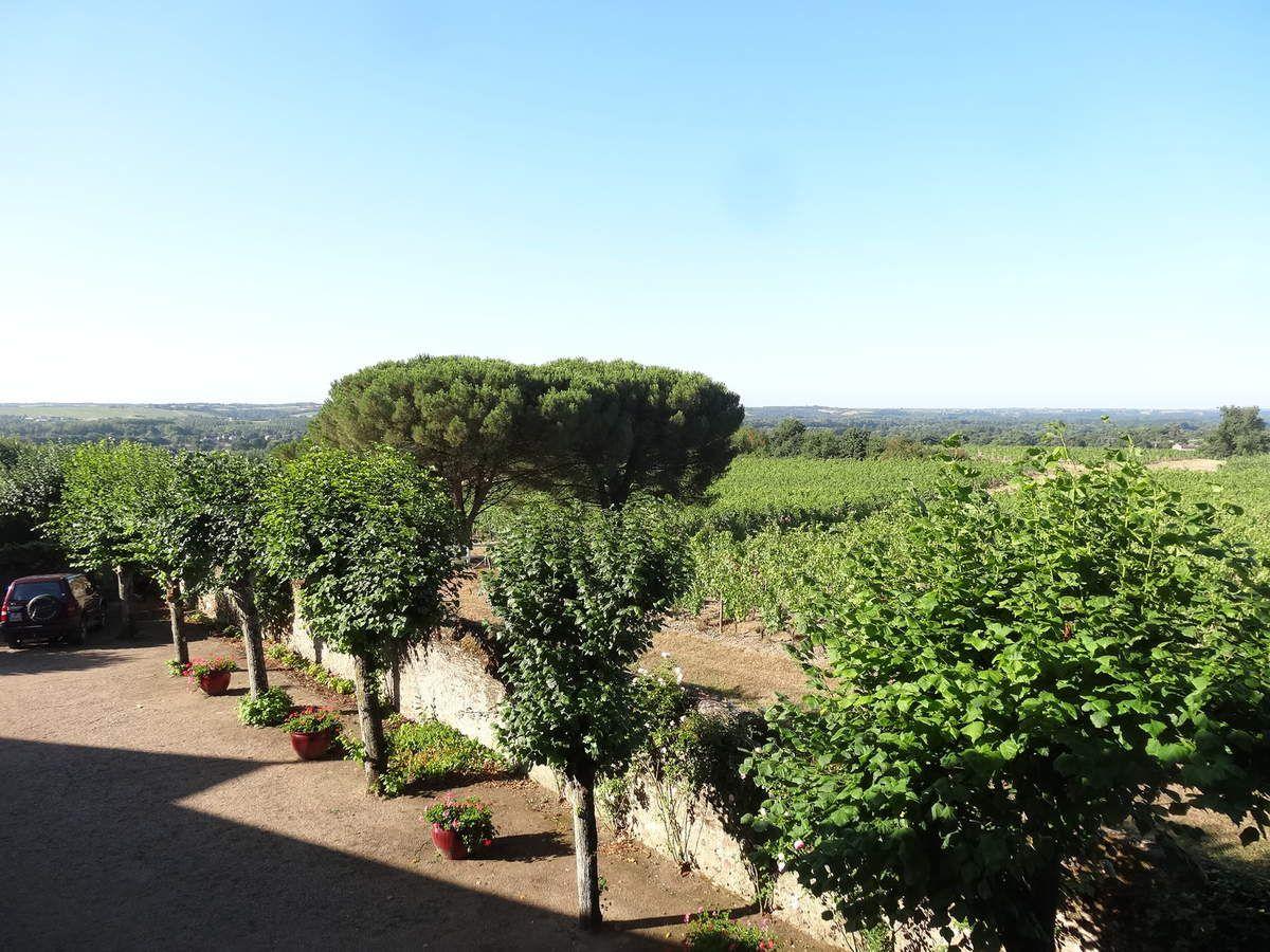 Savennières, Vue sur le vignoble du Domaine de la Roche aux Moines et la Loire, Cl. Elisabeth Poulain