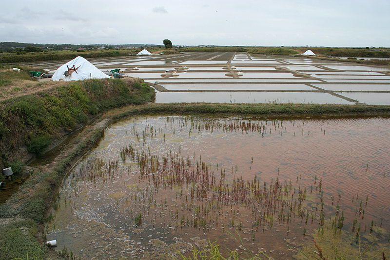 Marais salants guérandais, Ph-Nono-vif-wikipedia
