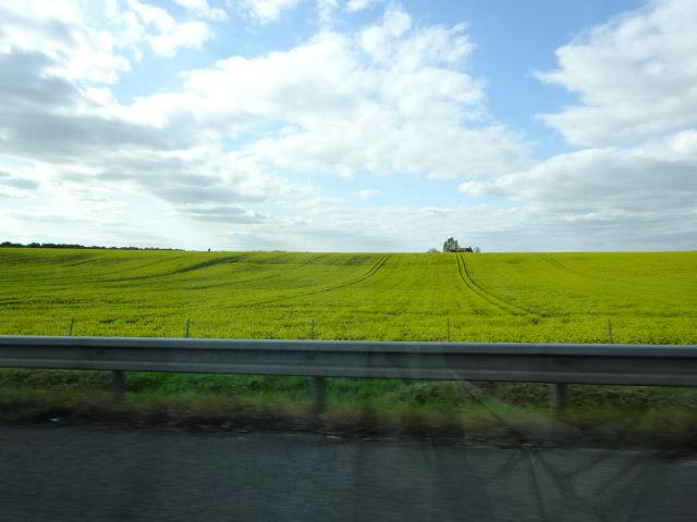 Champ de colza, vue de l'autoroute au retour, Cl. Elisabeth Poulain