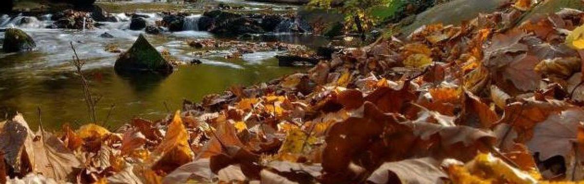 L'automne est bien là ............