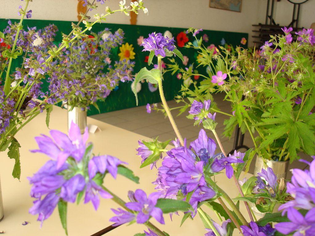 Exposition  Floralies Sauvages ,Petite Salle Polyvalente