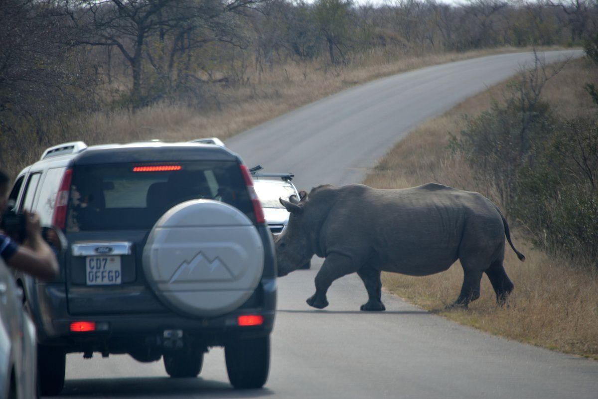 Afrique du Sud 5 : De Saint Lucia au Park Kruger via le Swatziland