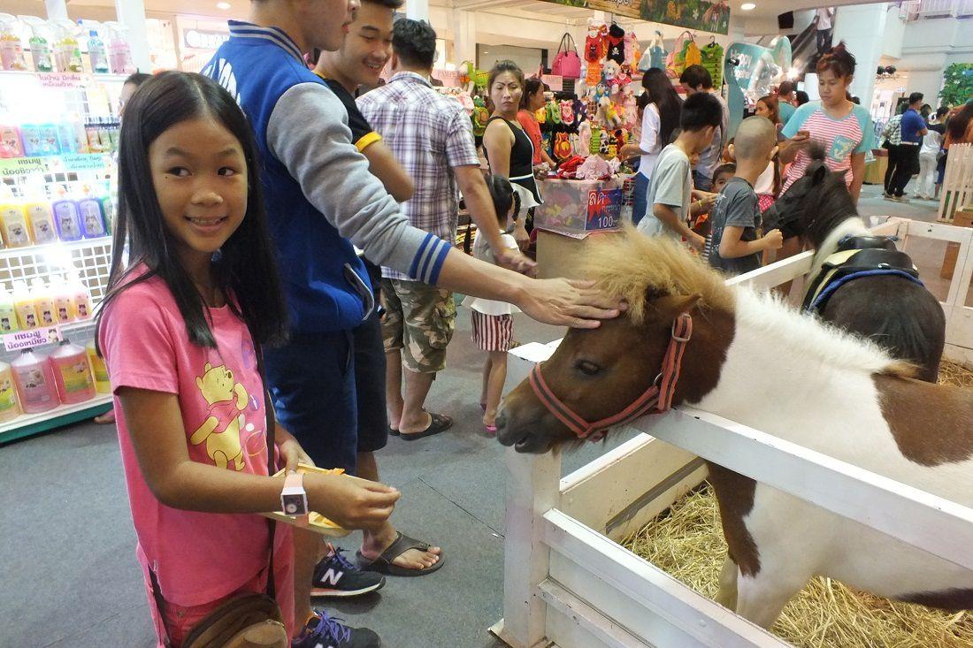 Du 5 au 10 juin 2015: Udonthani. Exposition exotique d'animaux