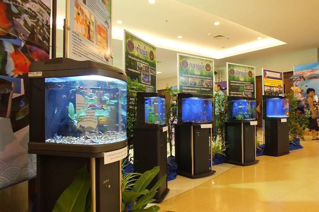 24 au 31 aout 2015: Udonthani. Exposition de poissons.