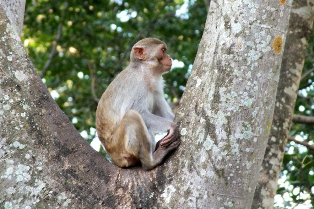 Loei : Yvon et les singes