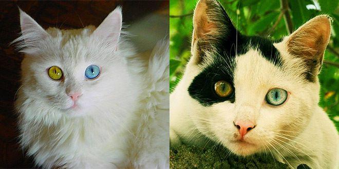 http://welikeit.fr/77013/incroyable-vous-allez-etre-fascines-par-les-yeux-hors-du-commun-de-ces-animaux