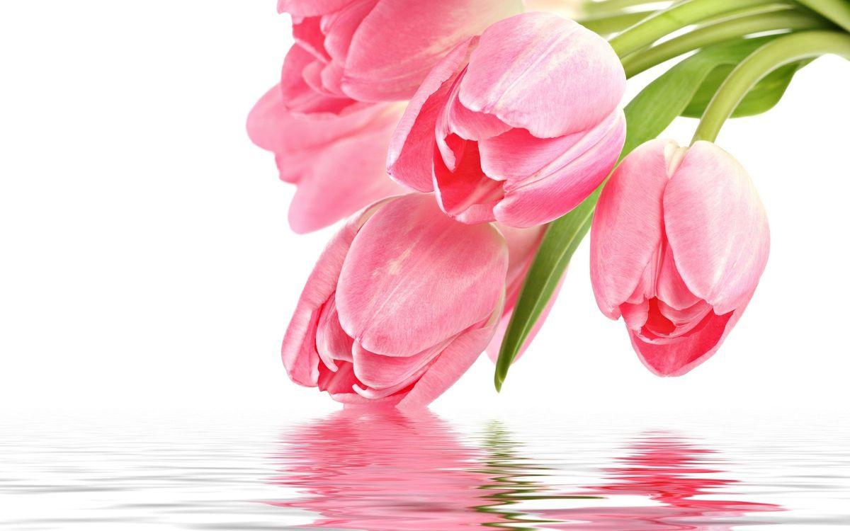 http://fr.best-wallpaper.net/Three-tulips_1024x768.html