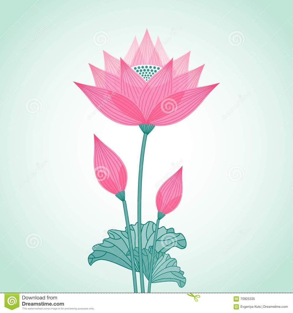 https://fr.dreamstime.com/illustration-stock-fleur-de-lotus-stylise-dcorative-d-isolement-image70925335