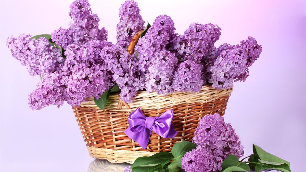 https://fr.best-wallpaper.net/A-basket-of-lilac-flowers-bow-purple_1920x1080.html