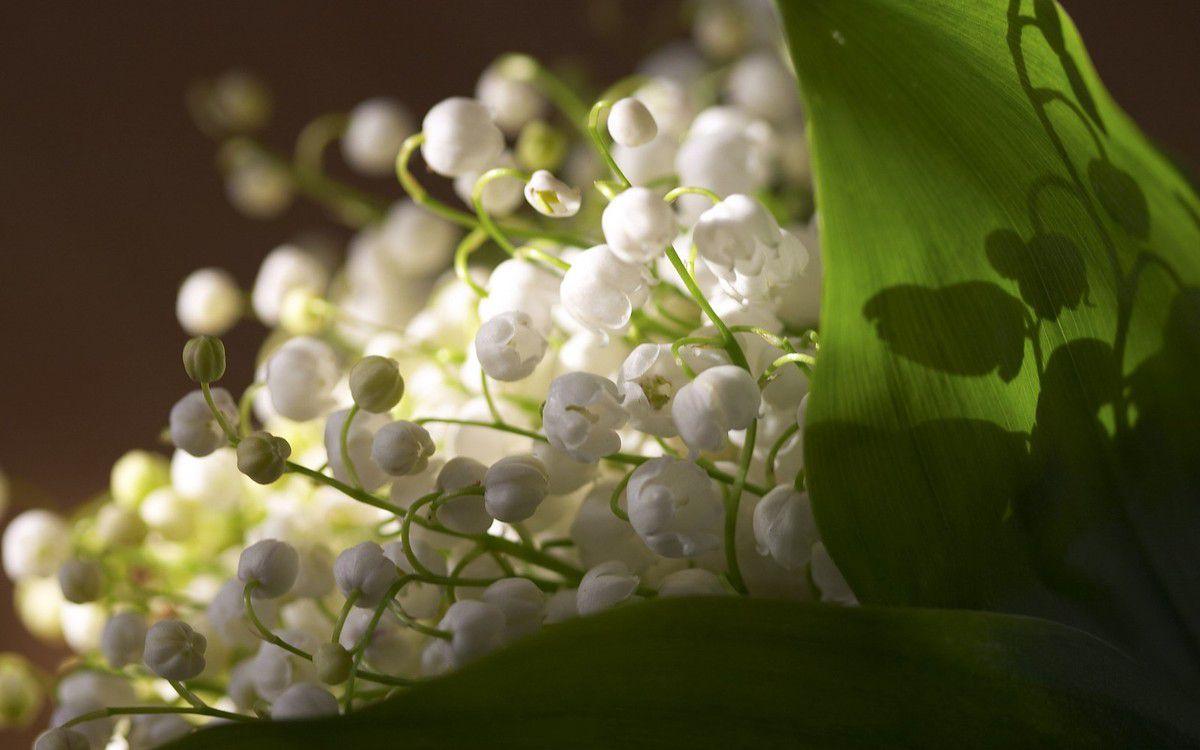 fonds d'écran fleuris