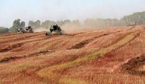 Monsanto propose une loi pour interdire les potagers