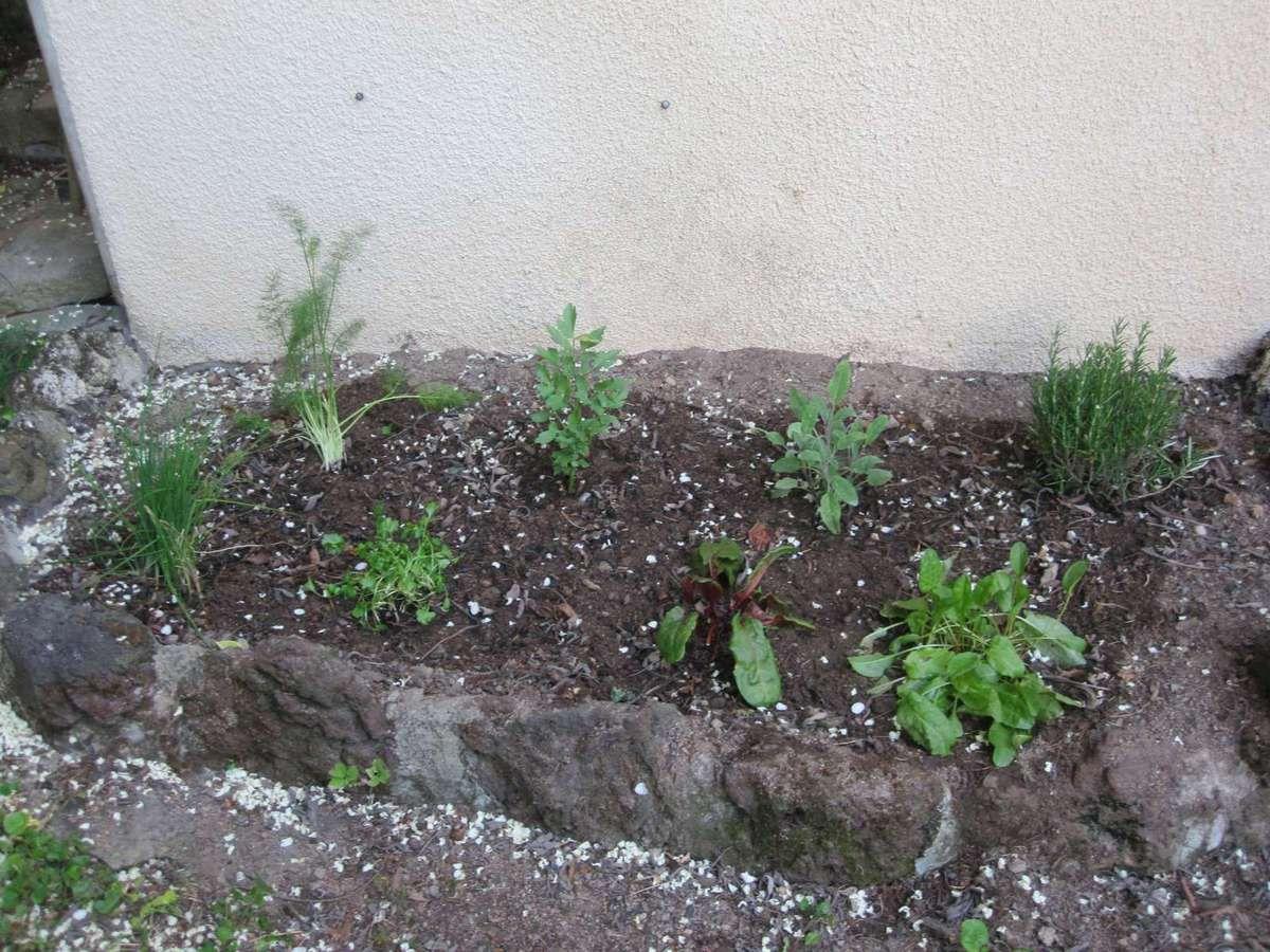 "Mon nouvel ""herbier"""
