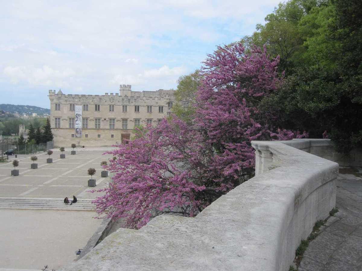 Voyage à Avignon