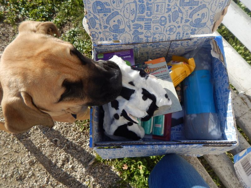 [ Woufbox ] Une box qui a du chien ( code promo inside )