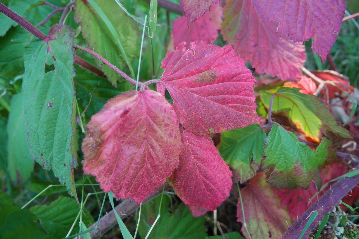 Le début de l'automne ?