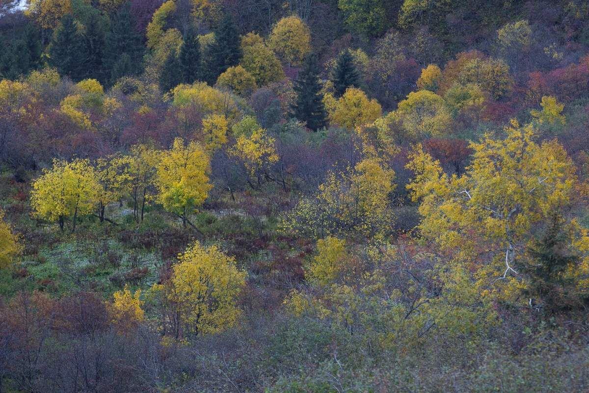 Vers le bas, c'est l'automne, et c'est encore bien sombre