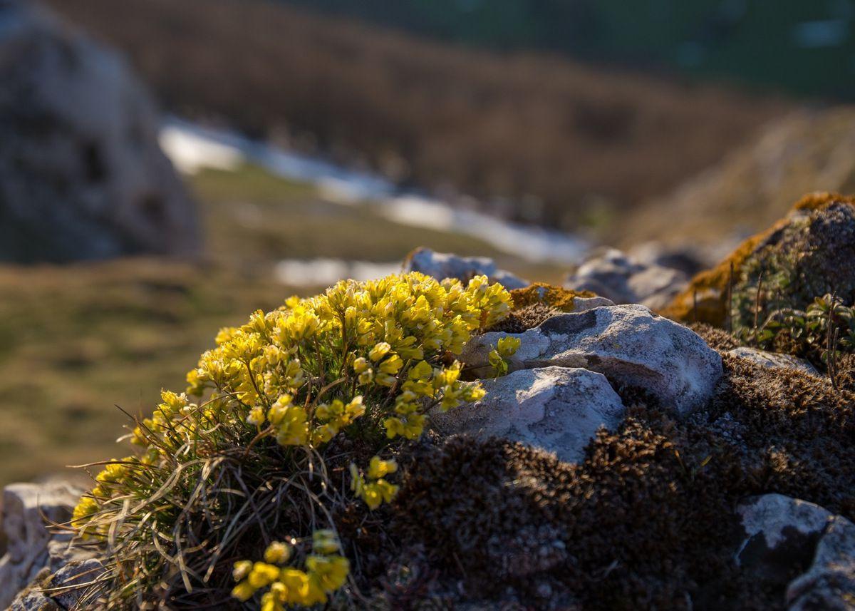 Le printemps s'accroche aux pentes de la montagne
