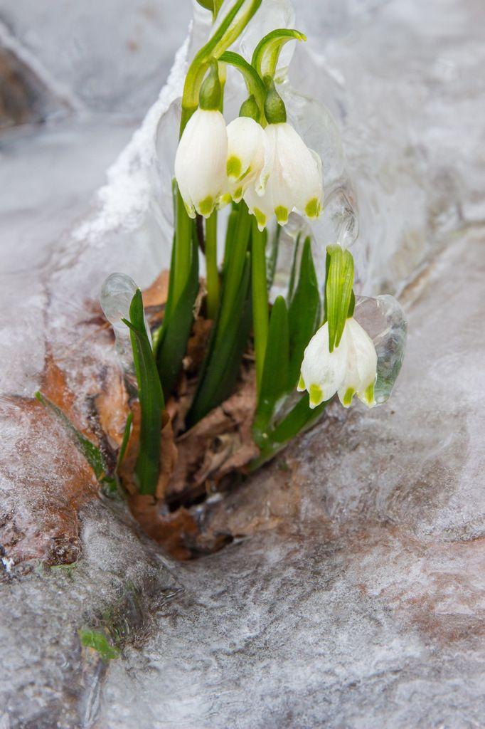 Le printemps en retard