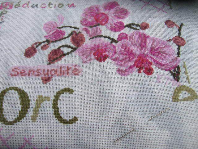 Sal LLP Orchidée # 7
