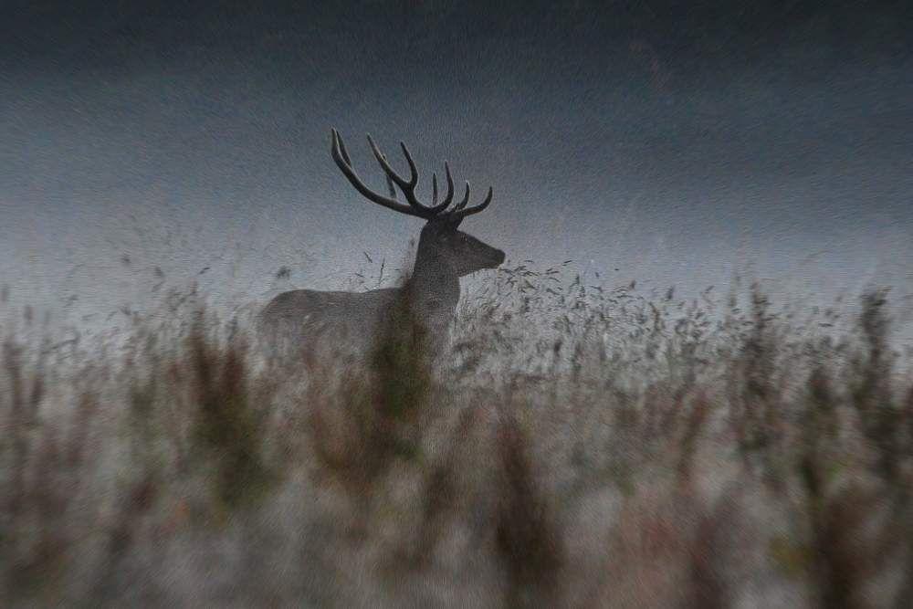 Velours dans la brume