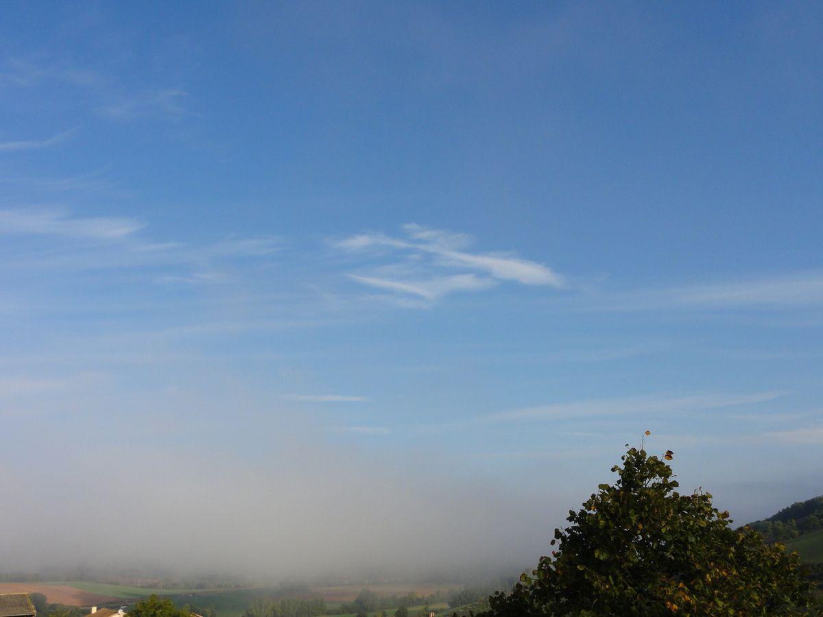 Brouillard du matin