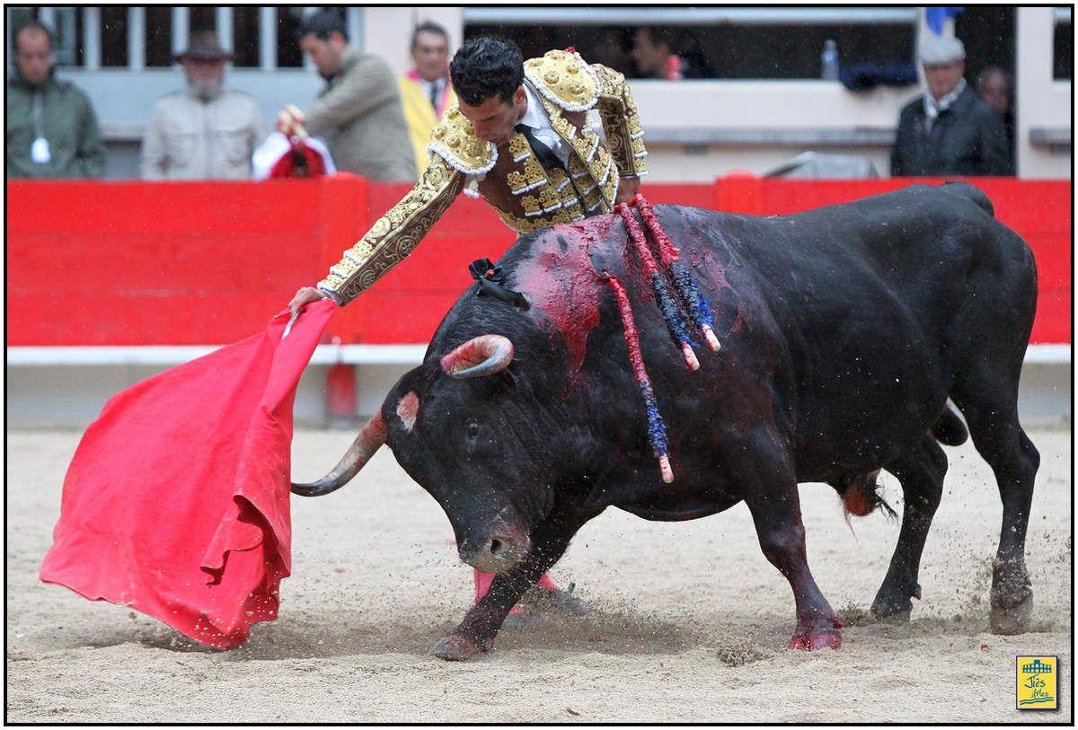 « Bonito » de Valverde pour Morenito de Aranda. Après quelques capotais de fixation, le bicho vint fort et avec fijeza lors des deux rencontres mais ne s'employa pas sous le fer. Morenito prit très vite la mesure de son adversaire et trouva d'emblée le soit pour des séries droitières de belle facture servies comme lors de son précédent combat en courant bien la main, en la baissant joliment, aspirant le bicho un peu soso avec beaucoup de temple. A gauche le Valverde afficha un parcours plus réduit et les naturelles, bien qu'esthétiques, furent moins consistantes. Bon retour à droite avant une entière en place libérant le second mouchoir de la tarde.