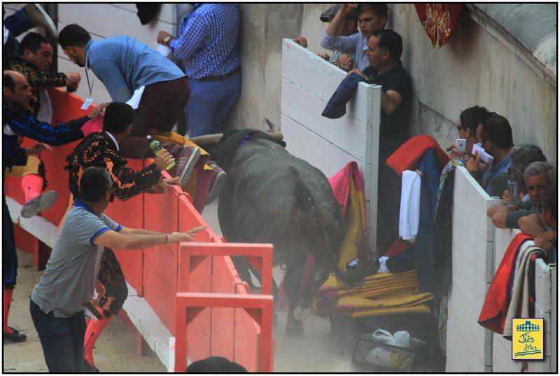 """PAR ICI LA SORTIE ! ... """"MORISCO"""" TORO DE VICTORINO MARTIN N° 58 NE EN 01/2011 ...512 Kg"""
